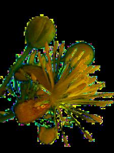 Pourquoi utiliser les Fleurs de Bach - Thérapeutes Fleurs de Bach - Bordeaux - Gironde - Rive droite - Bordeaux Métropole