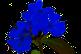 Thérapeutes grossesse - naissance - Fleurs de Bach - Bordeaux - Gironde - Rive droite - Bordeaux Métropole