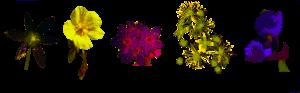 Thérapeutes Fleurs de Bach - Bordeaux - Gironde - Rive droite - Bordeaux Métropole