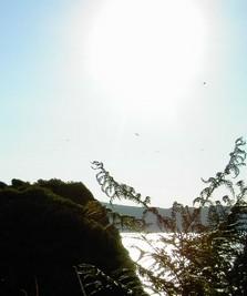 Equilibrer l'énergie dans votre lieu de Vie - Harmonisation du lieu d'habitation Martine Martin élève de Georges Prat